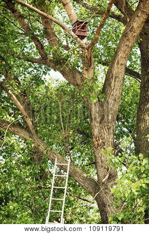 Tree With Birdhouse And Ladder In The Forest