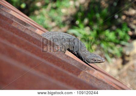 Lizard Hanging: Bridge Break