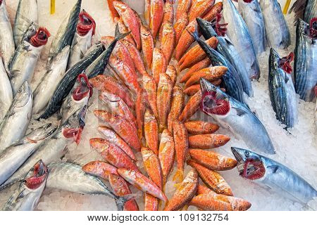 Fresh fish offer at a market