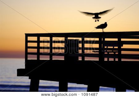 Gull Landing, Sunset On The Pier