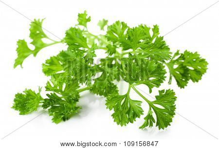 Fresh parsley isolated on white