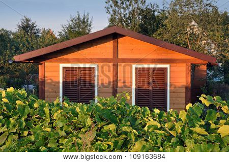 Private wooden house with shutters and growing grapes