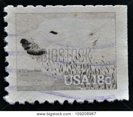 UNITED STATES OF AMERICA - CIRCA 1981: A stamp printed in USA shows Polar Bear (Ursus maritimus)