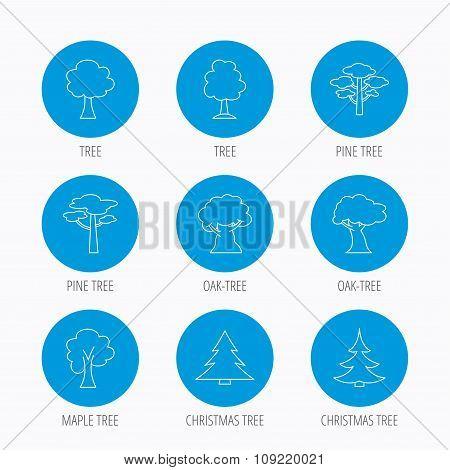 Pine tree, maple and oak icons. Christmas tree.