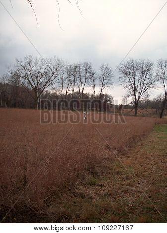 Open Field in Minnesota