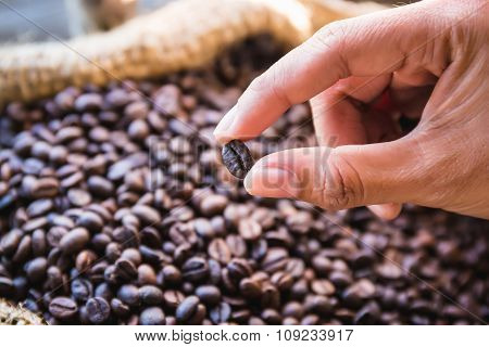 Closeup Coffee Beans In Hand With Sunlight In Gunny Bag