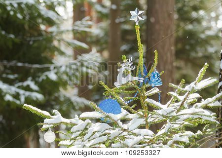 Live spruce tree in snowy wood decorated with Christmas ornaments and star finial