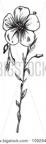 Flax flower, vintage engraved illustration. Industrial encyclopedia E.-O. Lami - 1875.