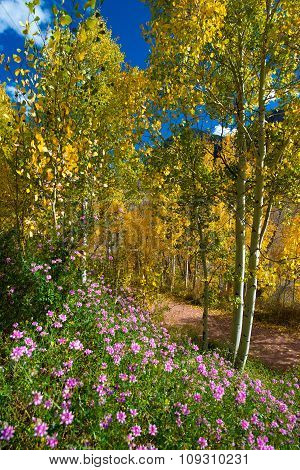 Fall Colors And Purple Wild Flowers