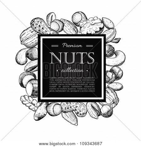 Vector Hand Drawn Nuts Illustration. Engraved