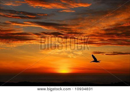 Pelican Sunset, Half Moon Bay California