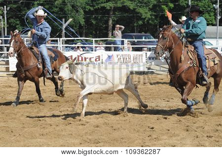 Two Rodeo Cowboys Trying To Rope A Running Steer