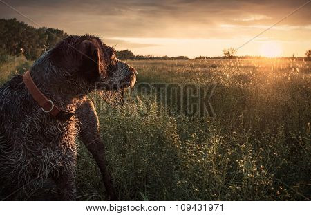 The dog and the sun