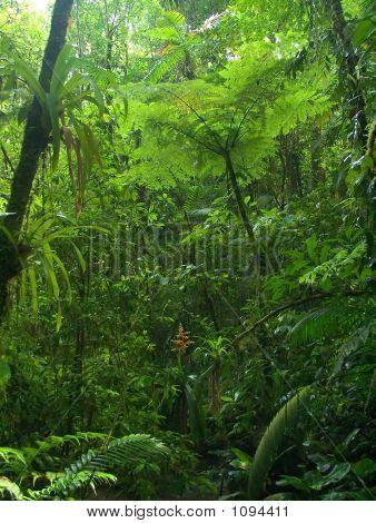 Chachagua Regenwald