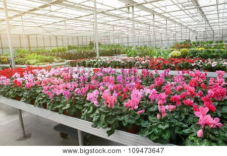Huge greenhouse with lot of flowers and plants for sale