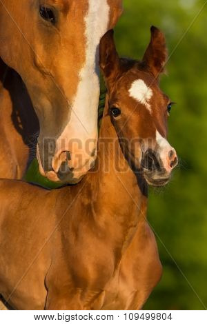 Horse with the baby