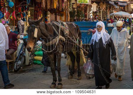 Donkey At The Marrakesh Street