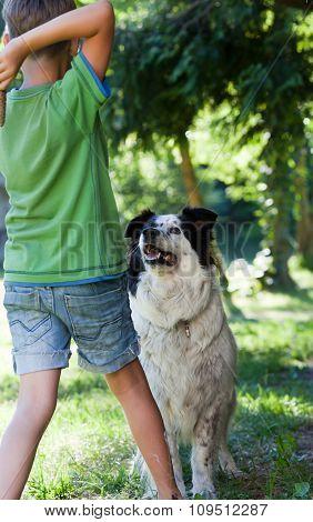 Boy Plays With Dog In Garden