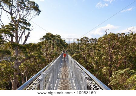 Tree Top Walk: Denmark, Western Australia