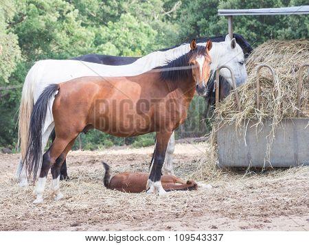 Parents Sons Horses