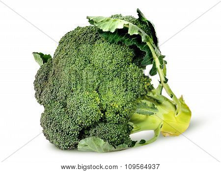 Big broccoli florets with leaves rotated isolated on white background poster