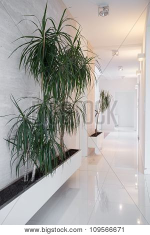 White Lighted Corridor With Home Plants