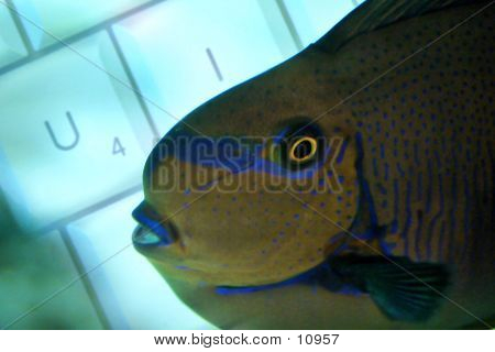 Fish swimming in front of keyboard. poster