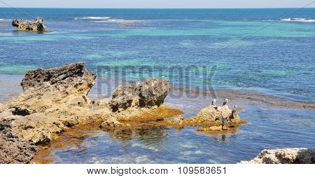 Pied Cormorants: Point Peron, Western Australia