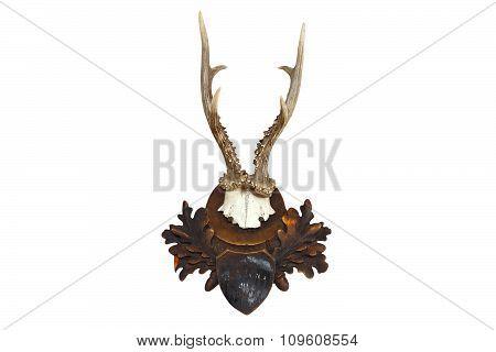 Roebuck Hunting Trophy