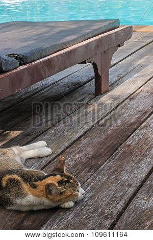 the cat is sleeping near the poolside lounger