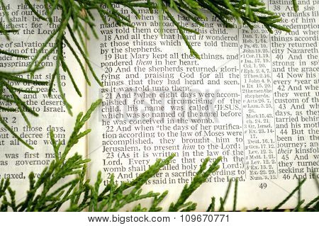 Open Bible at the Gospel of Luke chapter 2. The Christmas story with cedar greenery around it. poster