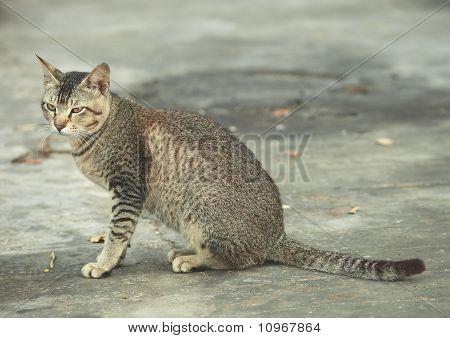 SITTING kitty