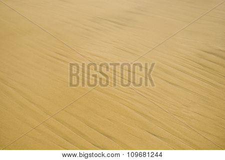 Sand texture. Sandy beach for background. Top view