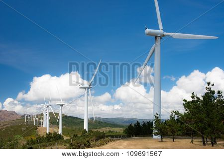 windmill-powered plant on hilltop
