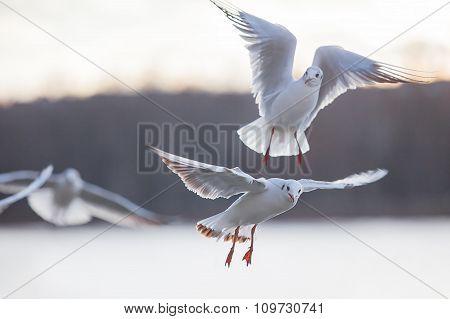 Gull against the sky