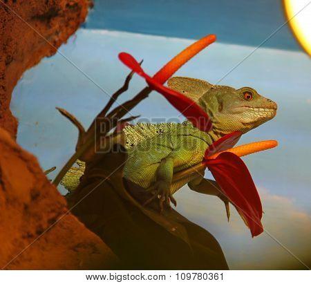 Basilisk,  lizard