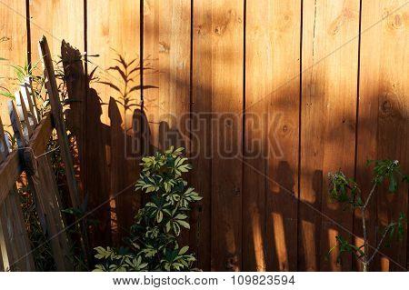 Sun Casting Shadows On Garden Fence