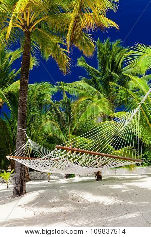 Empty hammock in a shade fo palm trees on Rarotonga, Cook Islands