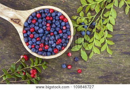 Bowl Of Wild Berries