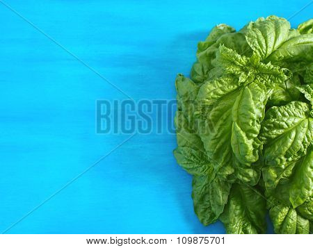 Fresh basil leaves on blue background