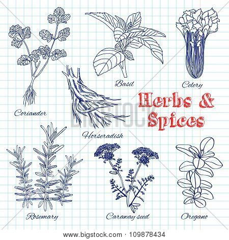 Vector Hand Drawn Set With Herbs And Spices.
