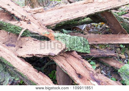 Pile Of Old Tattered Bark Covered With Moss