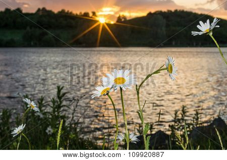 Flowers At Sundown