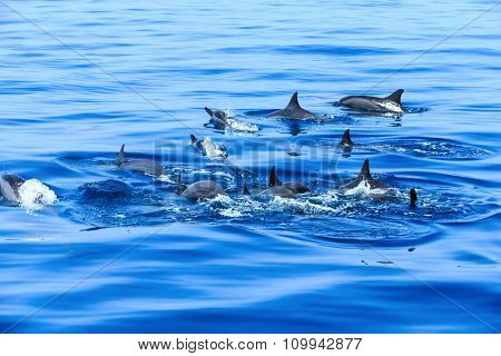 happy dolphins in the water