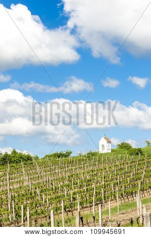 spring vineyard near Hnanice, Southern Moravia, Czech Republic