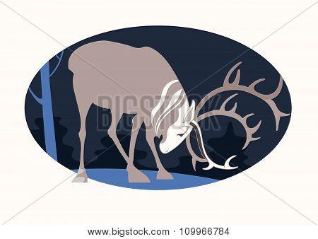 A strong reindeer