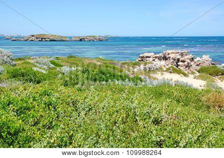 Dune Plants and Indian Ocean: Cape Peron, Western Australia