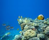 Underwater life of a hard-coral reef, Red Sea, Egypt. poster