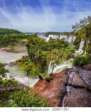 The famous black Andean condors sit on the edge of the ledge. Picturesque basaltic ledges form the famous waterfalls. Waterfalls Iguazu. The concept of active and exotic tourism