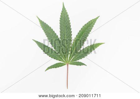 Isolated marijuana leaf with a blank white background